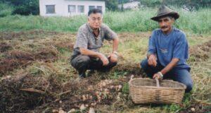 露地栽培のアガリクスを収穫する農夫と野澤