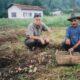 キノコ雑考=ブラジルに於けるキノコ栽培の史実とその背景=元JAIDO及びJICA 農水産専門家 野澤 弘司 (18)